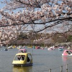 上野不忍池桜